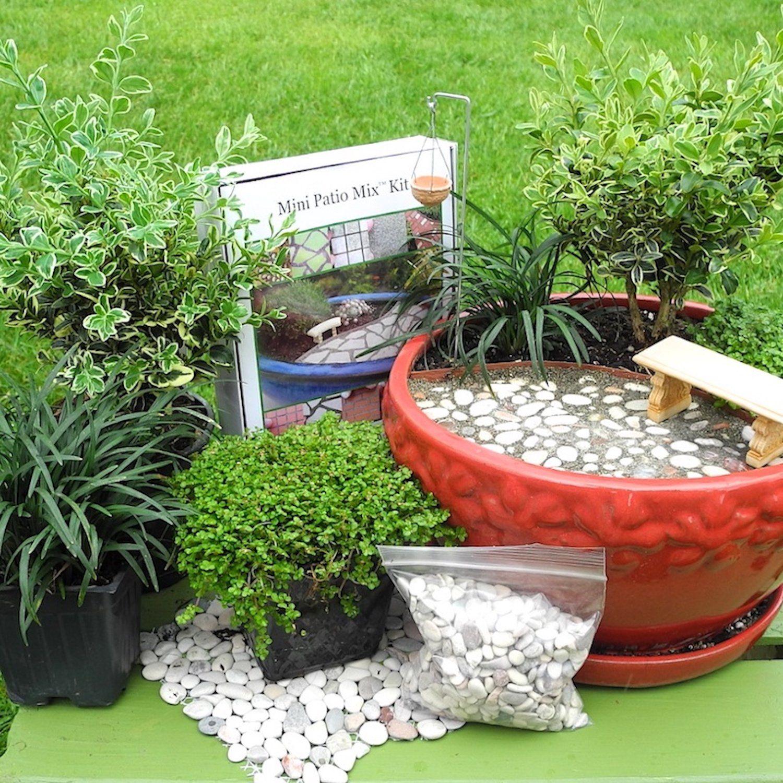 Buy Janit Steve A Coffee Miniature Garden Plants Garden Kits
