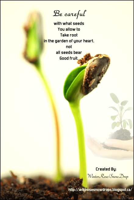 Be Careful with what seeds you allow to.... Seeds, Best