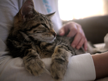 Caring for a Diabetic Cat The Good and The Bad of