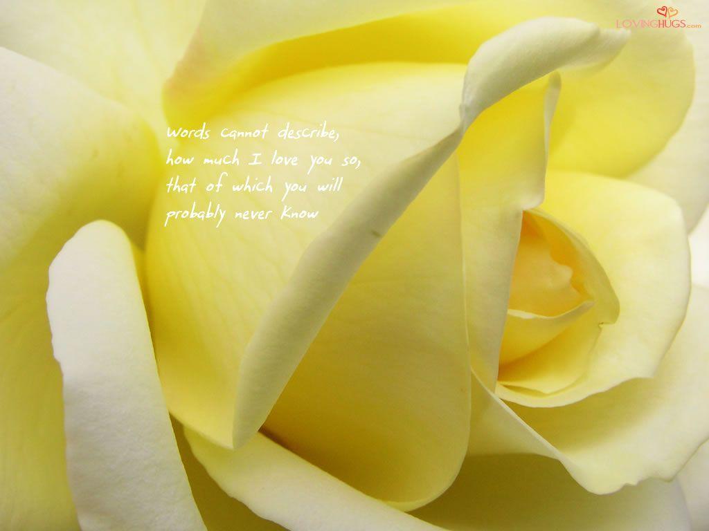 Romantic Love Romantic Love Rose Yellow Roses Flowers