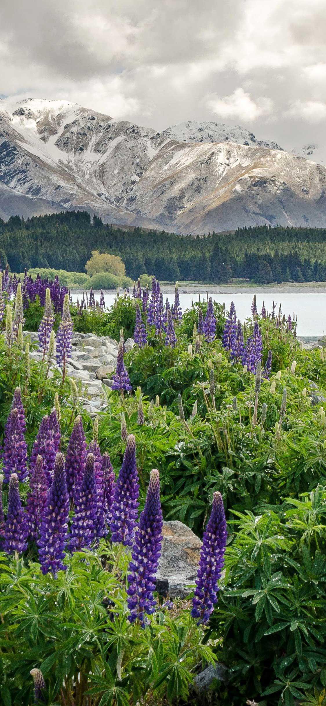 Iphone Pro Wallpaper New zealand mountains flowers lake