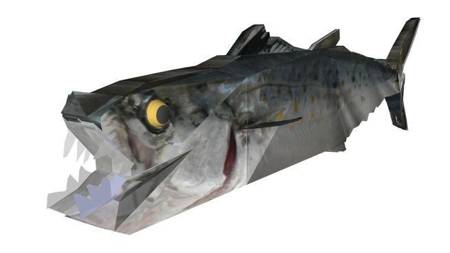 Atlantic Spanish Mackerel - 3D Warehouse
