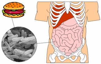 – Marina Muñoz Cervera – La contaminación biótica o biológica conlleva la alteración de los alimentos y representa una amenaza para nuestra salud. Hemos ido conociendo las formas en que…