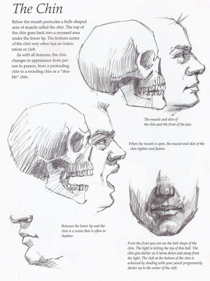 Atractivo Bajo La Anatomía Barbilla Imágenes - Imágenes de Anatomía ...