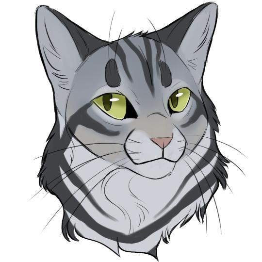 Bumblestripe By Climbstudio   leafpool   Pinterest   Katzen und Zeichnen