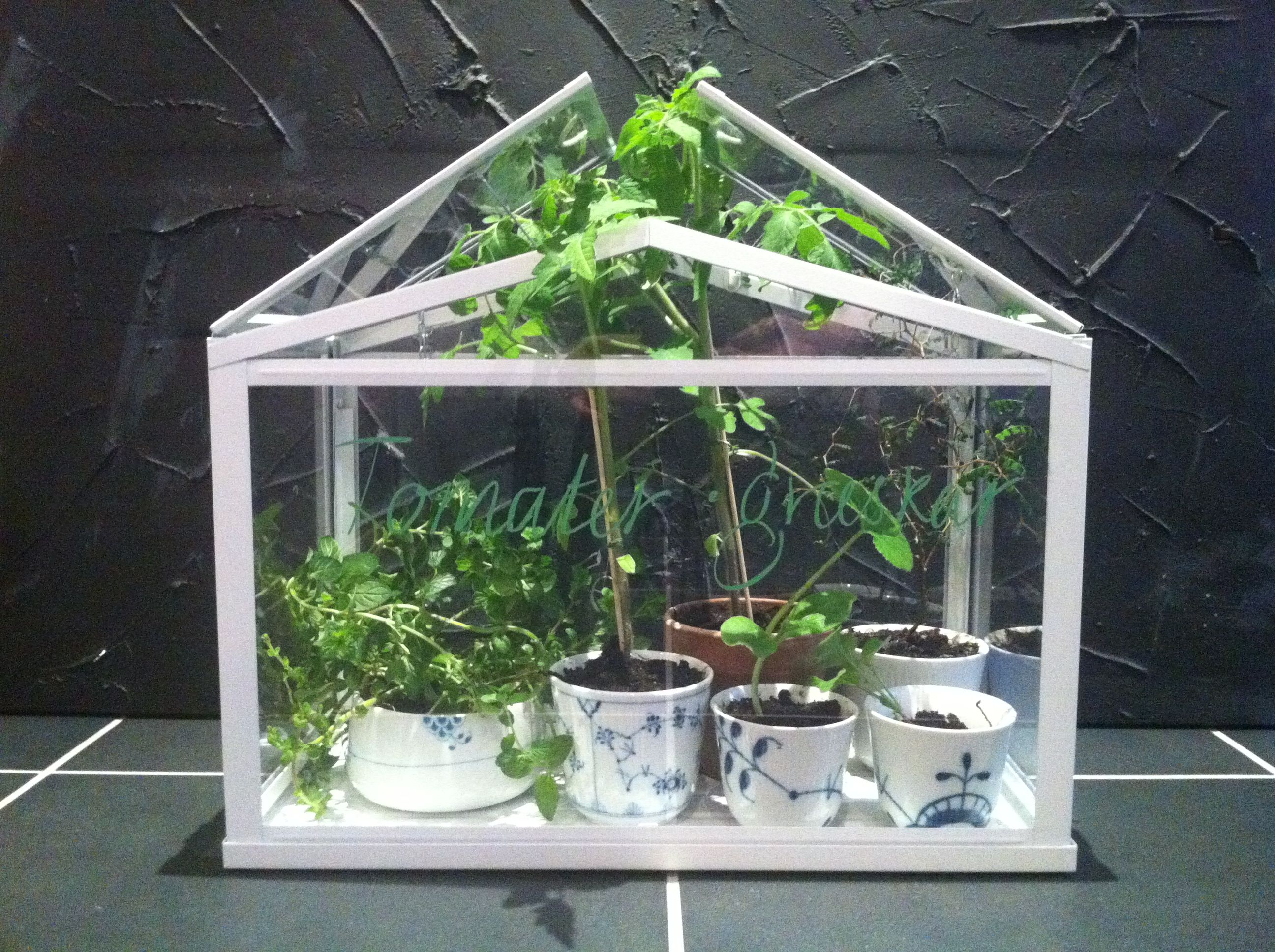 Ikea Mini greenhouse, Royal Copenhagen cups