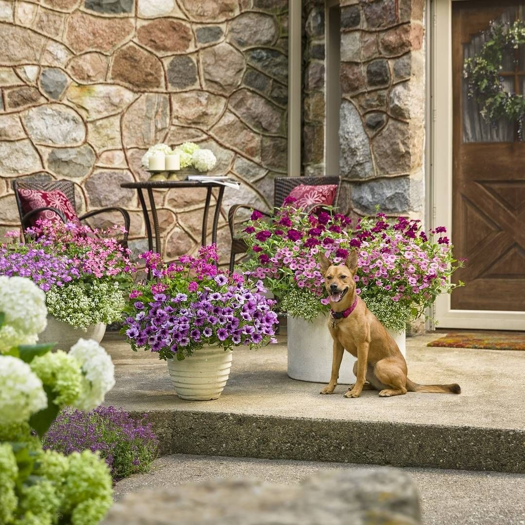 How welcoming is your front entrance? When you decorate with colorful Supertunias, Superbenas and other versatile flowers like you see here, you'll have non-stop color from spring into fall. Discover more plants that flourish all season at www.beauty.provenwinners.com/enduring.