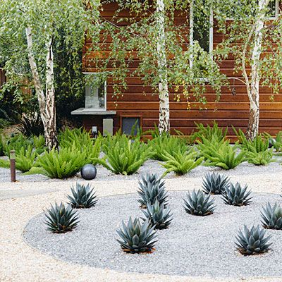 Use them as an artful accent In this Menlo Park, CA backyard, agaves (A.'Blue Glow') in the circular bed—edged with almost-invisible black steel—are widely spaced to show off their structural shapes (this also allow room for growth). Inside the circle, crushed gravel in grey further helps set apart the planting from the otherwise buff-colored gravel of the pathways.