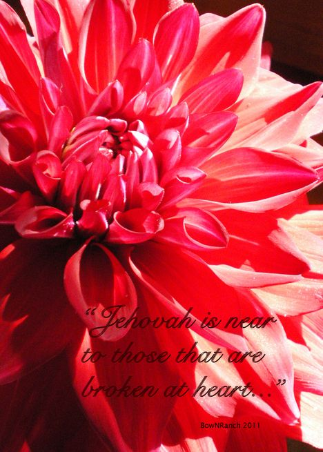 Jehovahs witness greeting cards neat pinterest jehovah s jehovahs witness greeting cards m4hsunfo
