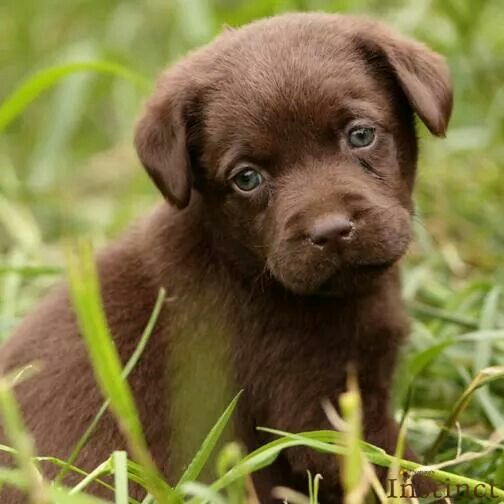 Daaaaww ) Dieren baby's, Huisdierenfotografie en Hondjes