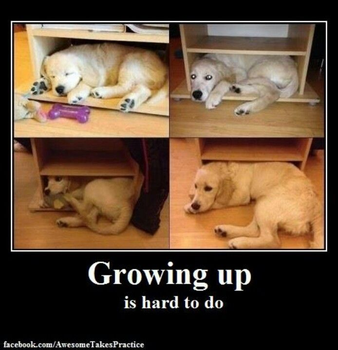I used to fit...