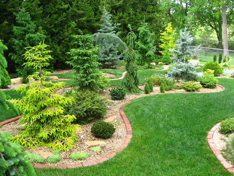 Conifer Garden Ideas 2012 60 beautiful conifer shrub tree plant combinations Brick Border Rock And Weeping Conifers Edging Idea And Landscaping