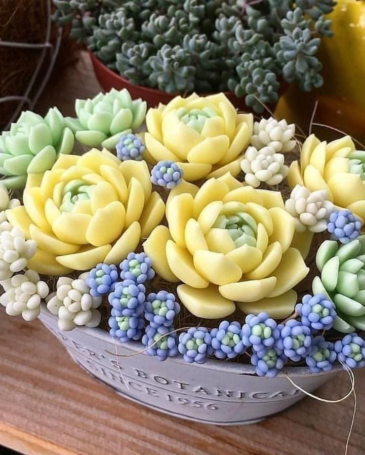 How Should Succulent Plants Be Raised? - Lily Fashion Style