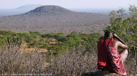 Maasai Steppe  The African People & Wildlife Fund