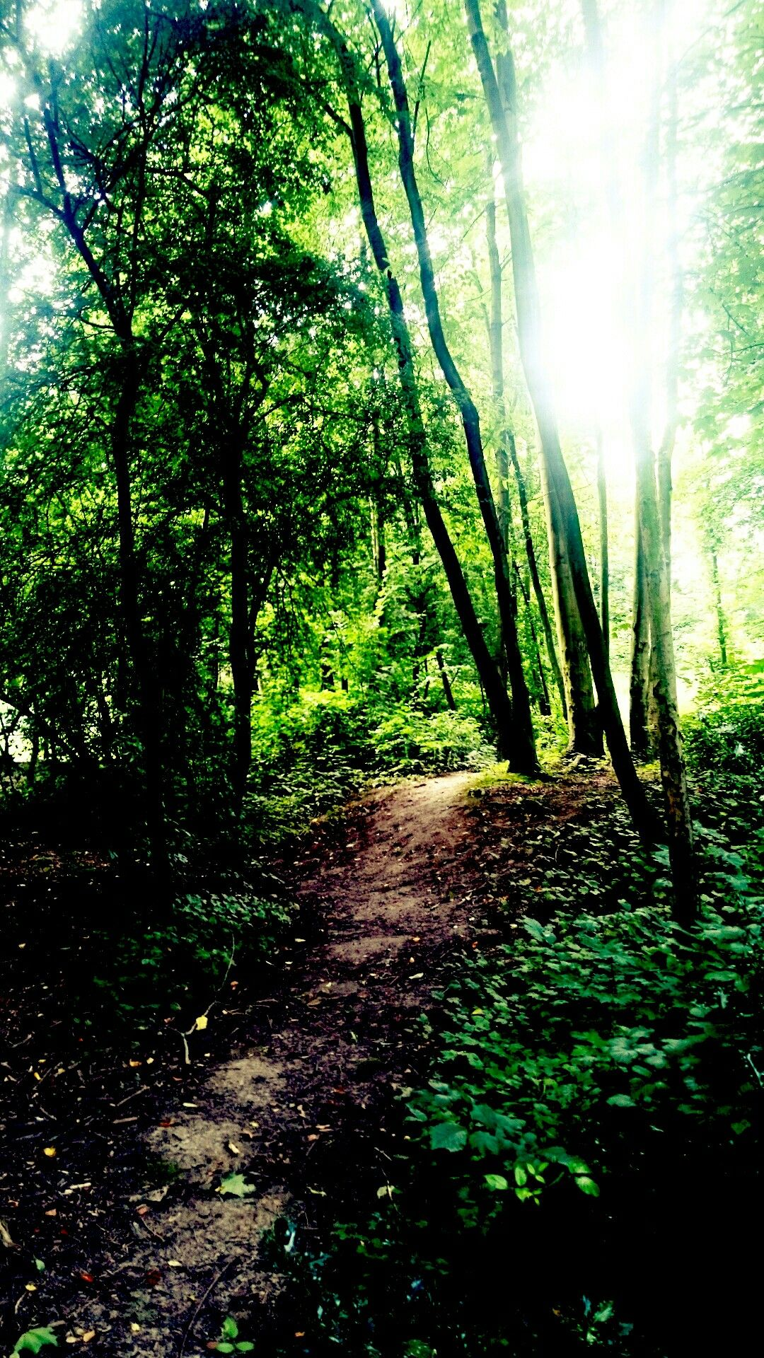 Sun in the Forrest