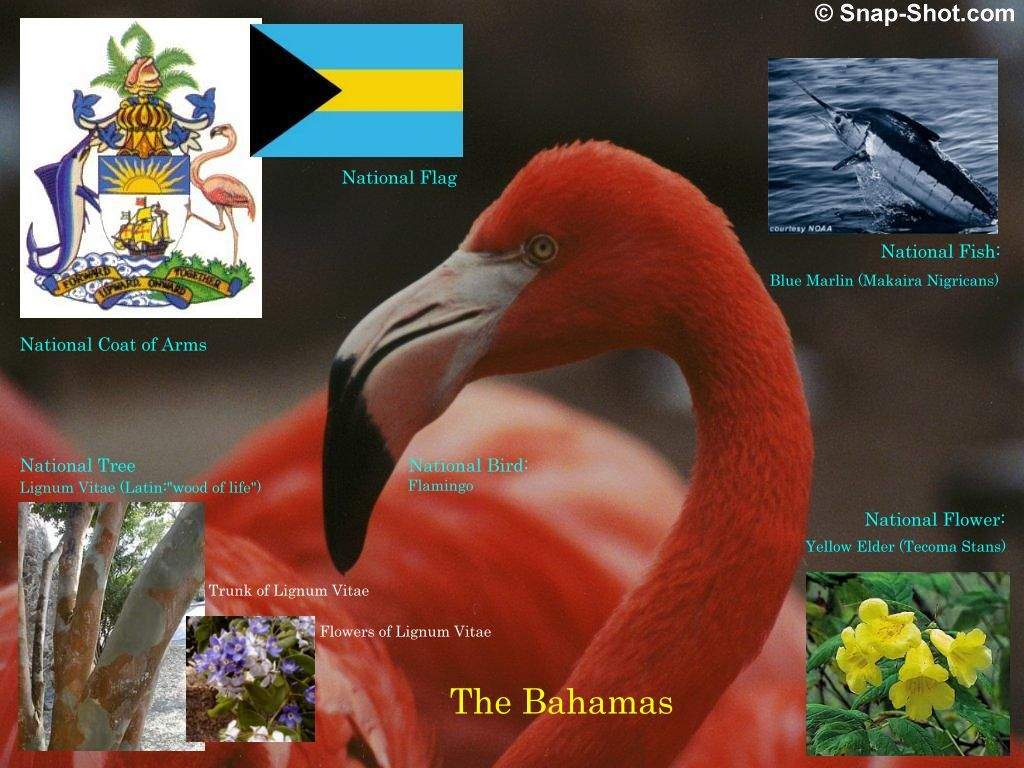 0 Bahamassymbols0 768