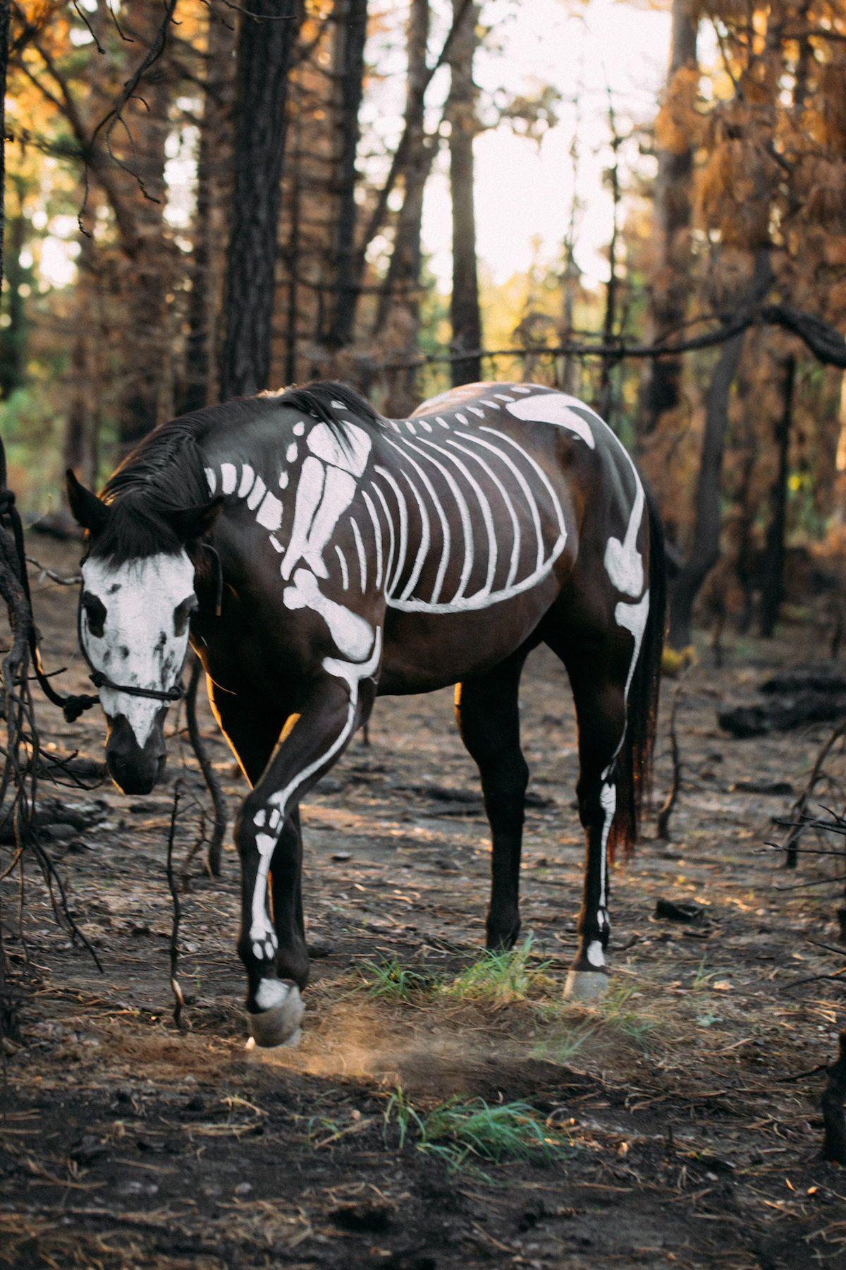 moody jewel-toned halloween wedding inspiration shoot | photography