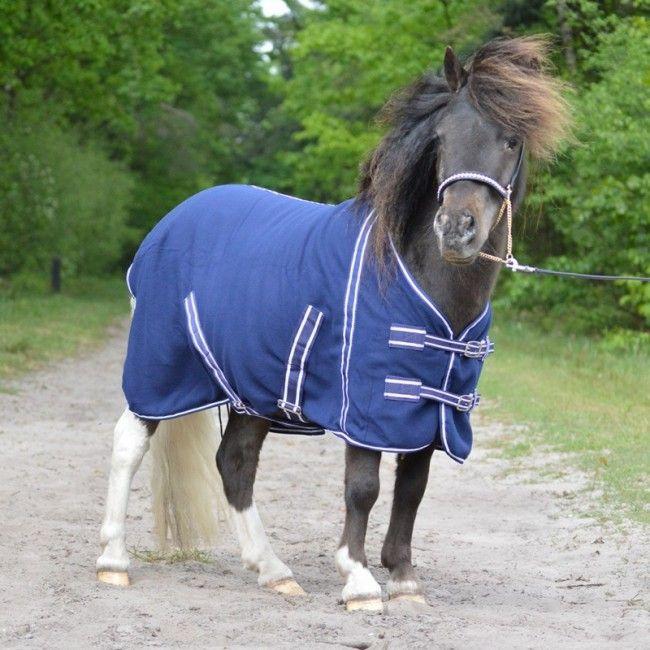 Pin On Mini Horses Shetland Ponies