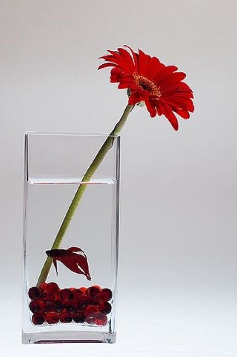 Betta need 2.5+ gallons, a place to hide, temperatures of 72-80 ...