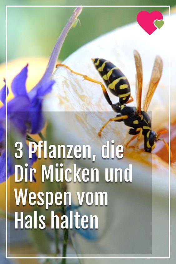 3 Pflanzen, mit denen Du Dir Mücken und Wespen vom Hals hältst
