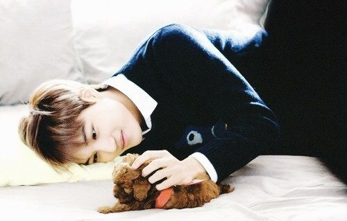 Top 9 Most Adorable Pets Of K Pop Idols Kim Jong In Exo Kai Kpop Exo