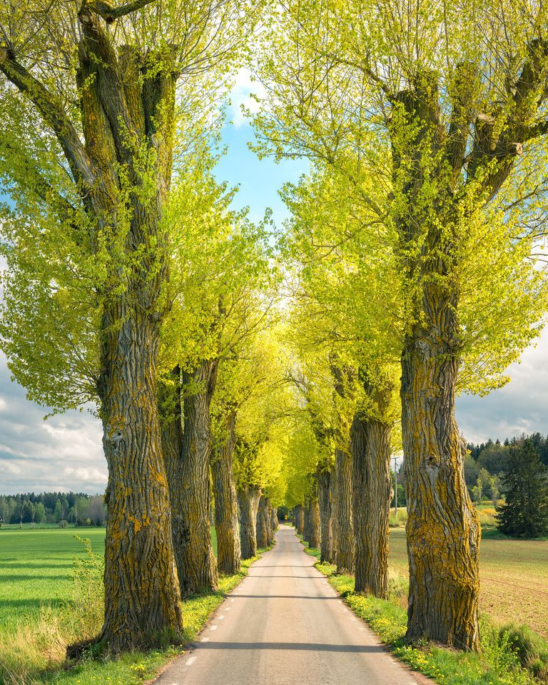 Stunning Landscaping Around A Tree Ideas Landscaping Expert Tips Landscaping Around Trees Landscape Trees Landscape Borders