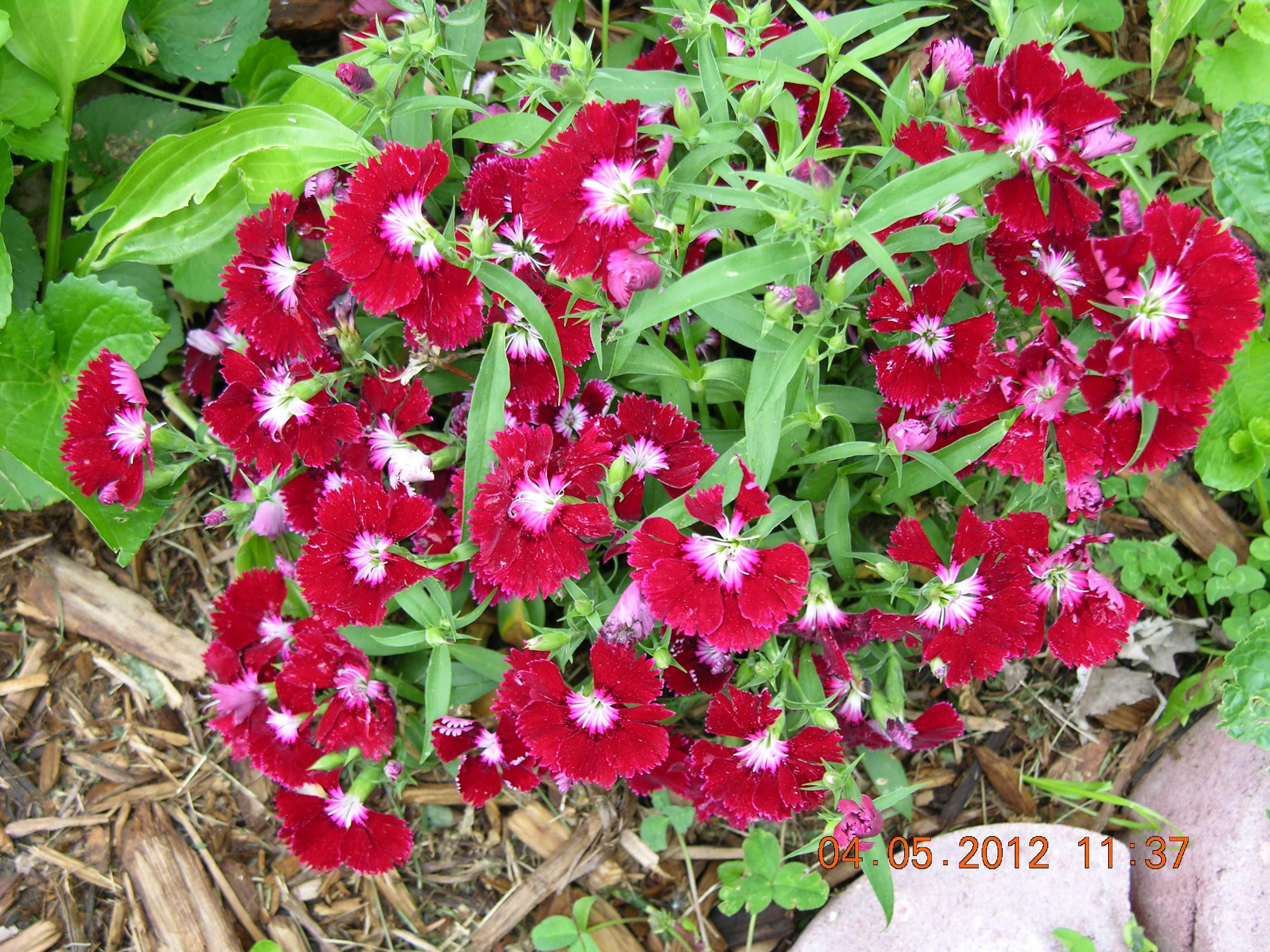 flower Plants, Flowers, Garden