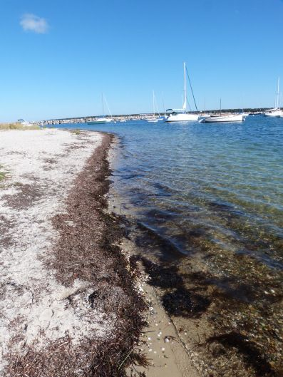 The beautiful beach at Vineyard Haven on Martha's Vineyard.   Find out more about my experience on this beautiful island at The World on my Necklace http://bit.ly/1ncwZjn