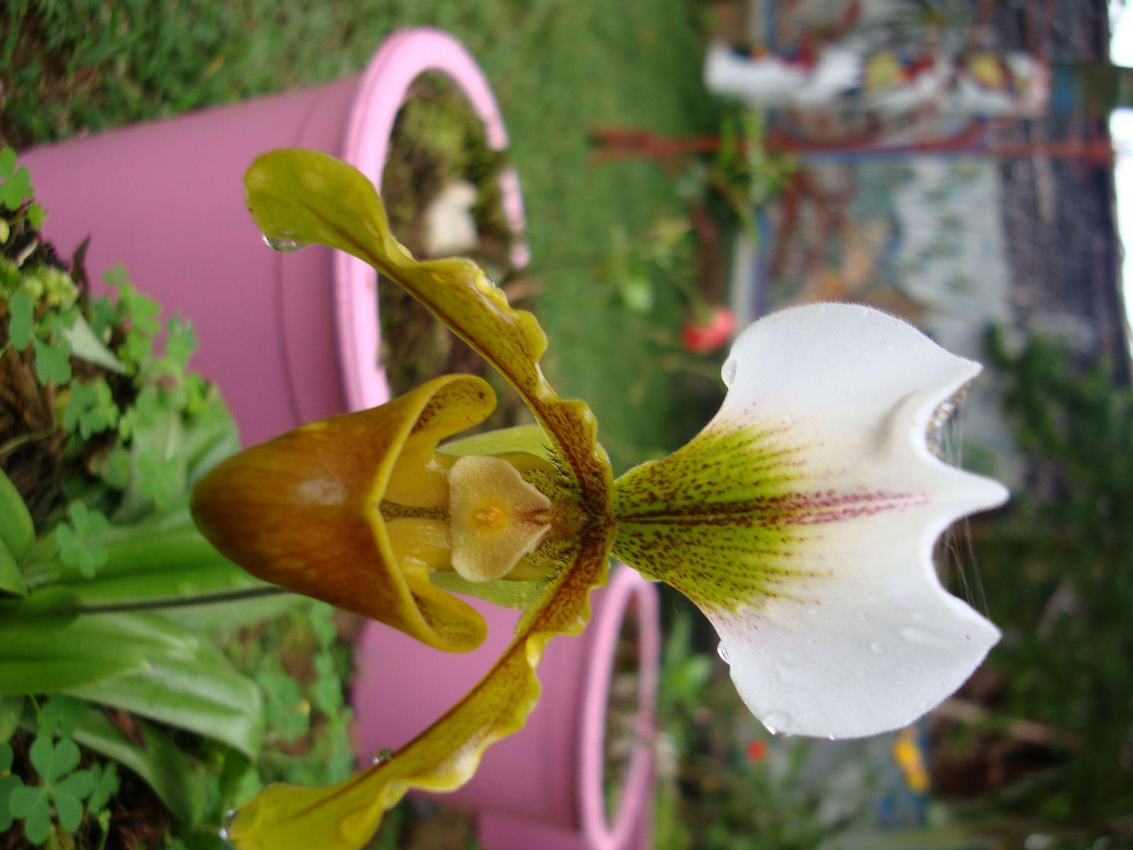 Fleur De Madagascar Madagascar Pinterest Madagascar