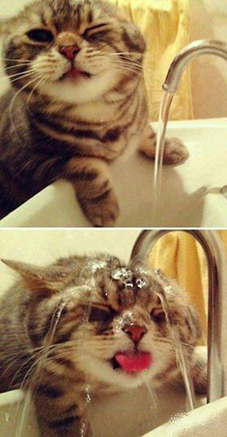 Katzen und Wasser ;)