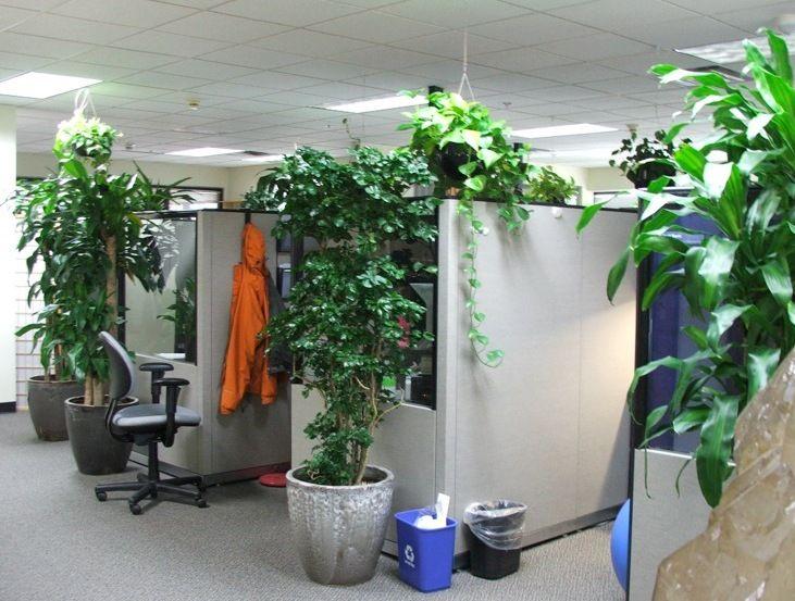 modern office plants. 9 Low-maintenance Plants For The Office Modern