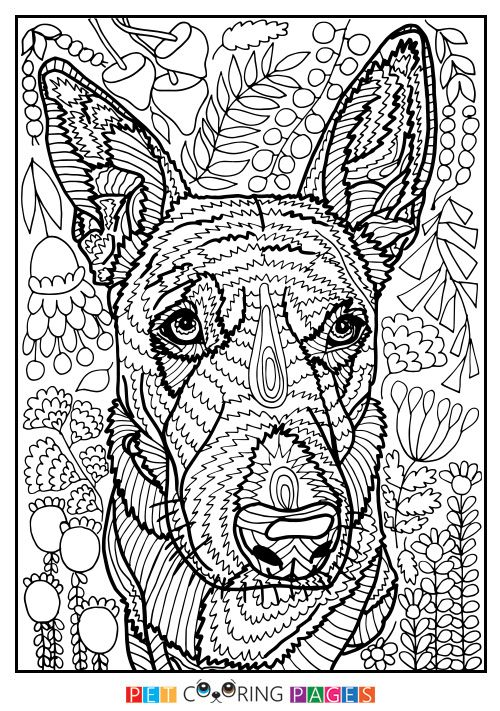 Free Printable Australian Cattle Dog Coloring Page Lily Available For Download Simple And Detailed Versions Adults Kids