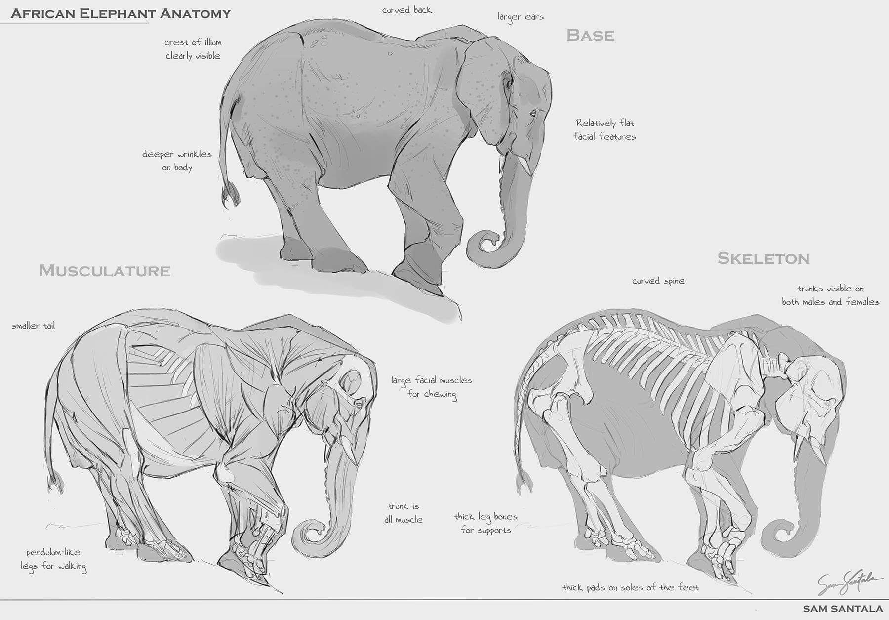 Pin de Arlete Martin en Elefante | Pinterest | Elefantes y Anatomía