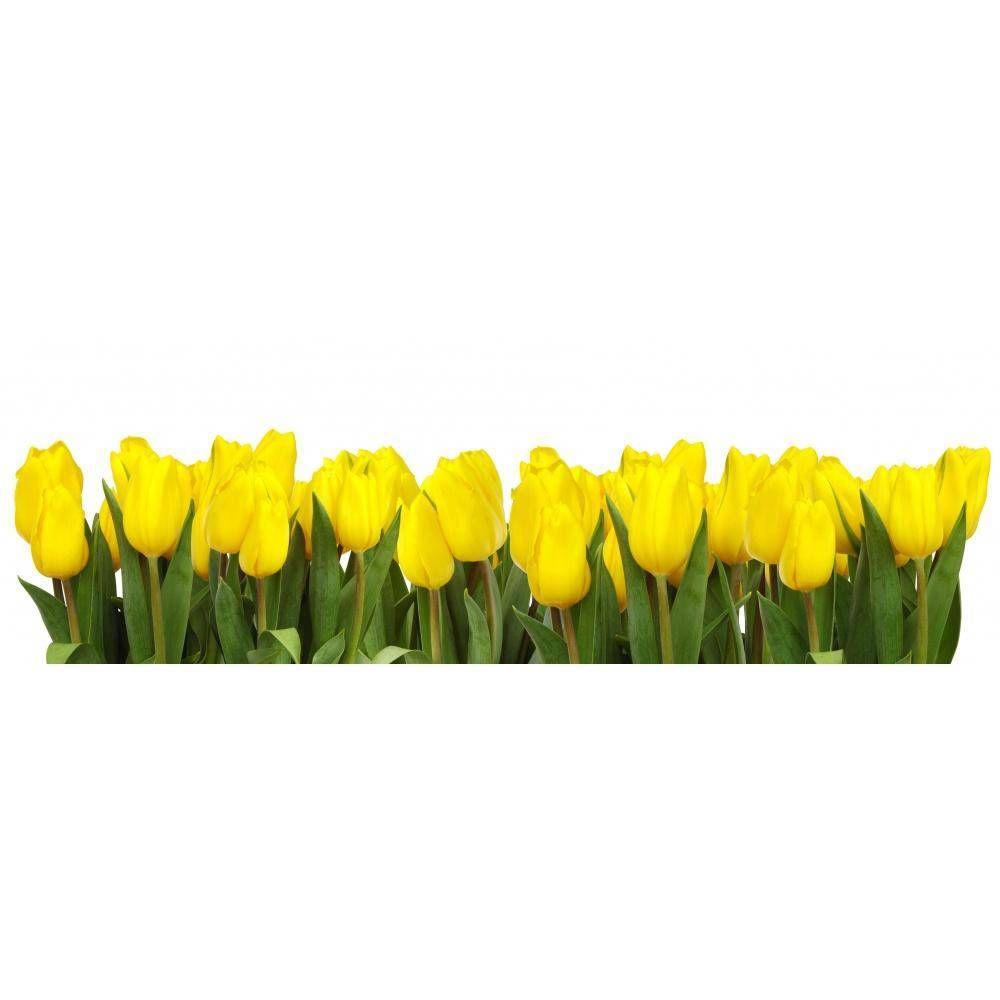 Kanwa Tulipany Zolte Yellow Tulips Tulips Botany