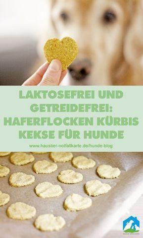 Hunde Kekse selber machen: Haferflocken Kürbis Herzen