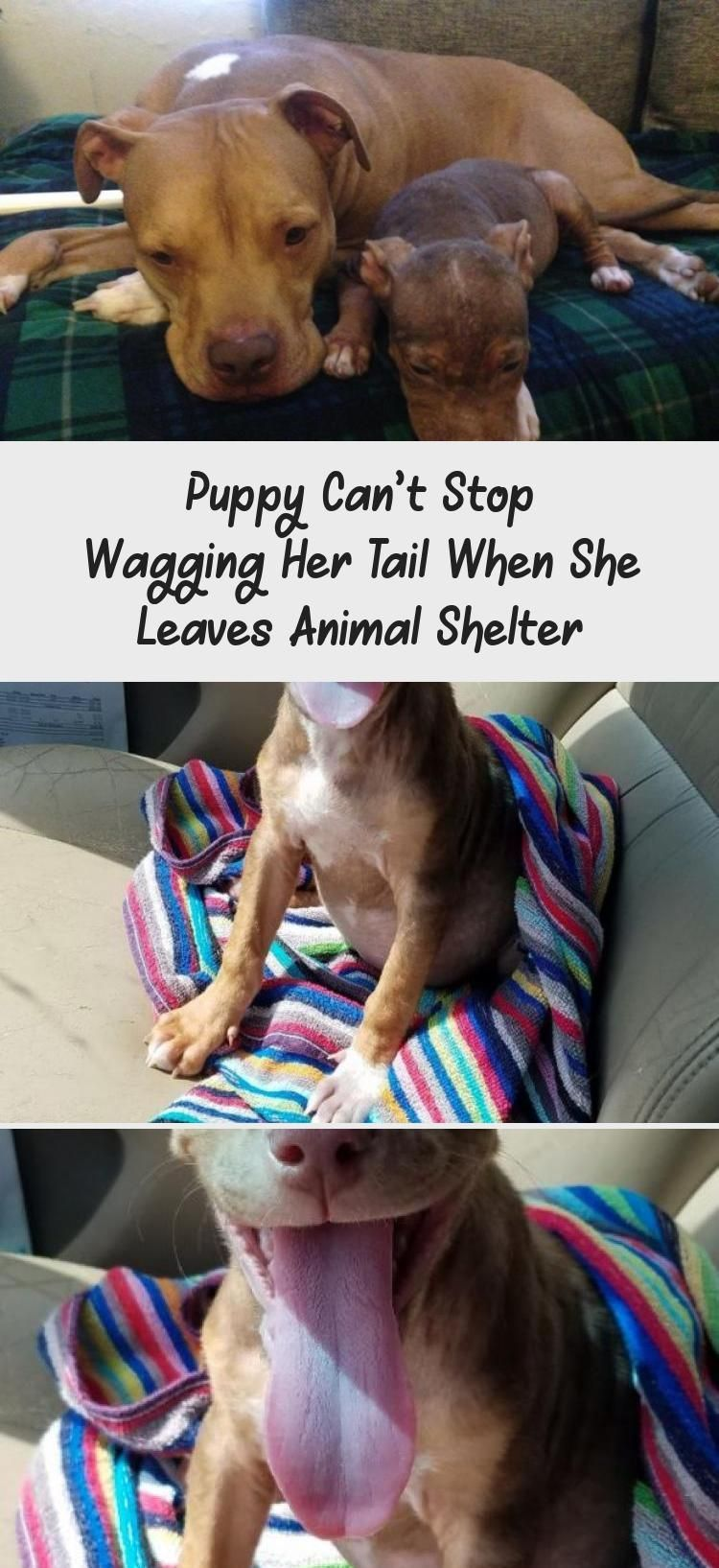 Puppy Can't Stop Wagging Her Tail When She Leaves Animal
