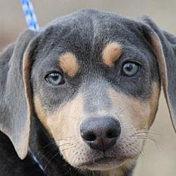 Pin by Terry Gorman on please take us home! Pet adoption
