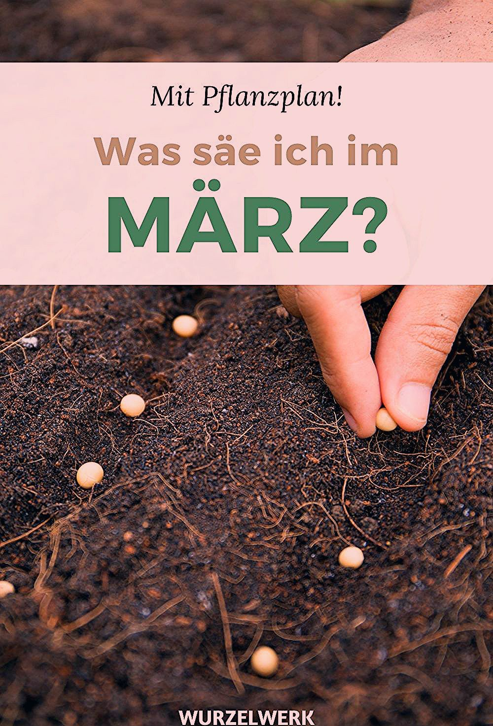 Photo of Aussaat & Pflanzen im März