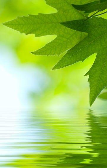 Verde Acido Viola Il Mondo Verde Sfondi Verdi Verde Und Colori