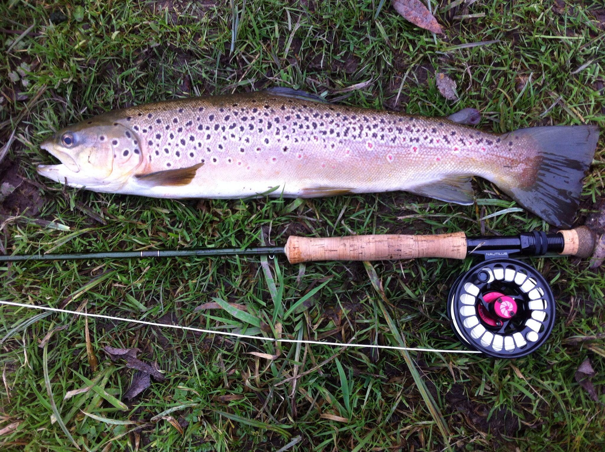4.7lb brown trout