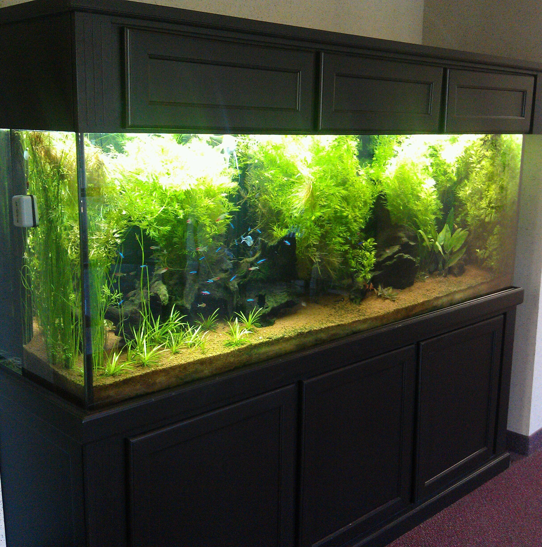 Fresh Water Planted Aquarium
