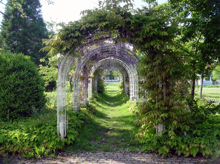 Rankhilfe Blauregen Kletterpflanze Bogen Garten Schon Gartenarbeit