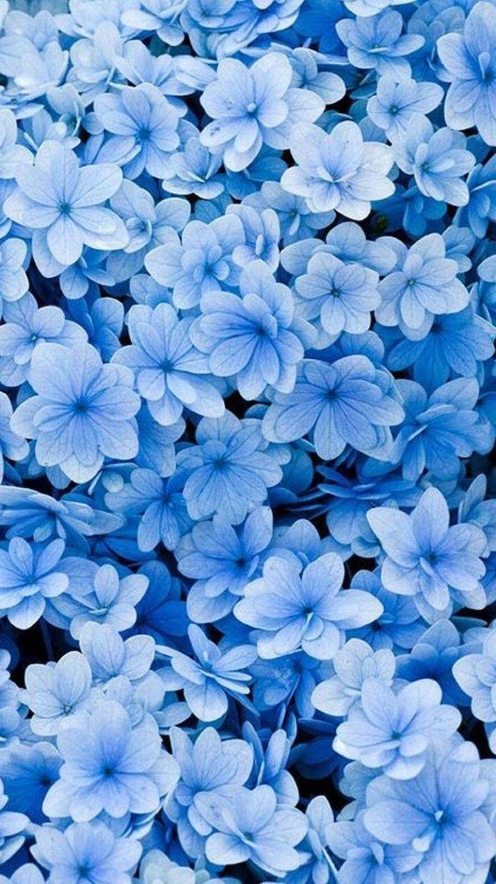 kleine blaue Blumen, florale Telefon Wallpaper, Telefon Hintergrund, Frühlingsbilder #beautif...