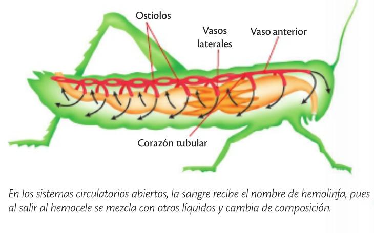 Pin De Rebecca Arteaga En Nutricion Animal Nutricion En Animales Funciones De Nutricion Sistema Circulatorio Abierto
