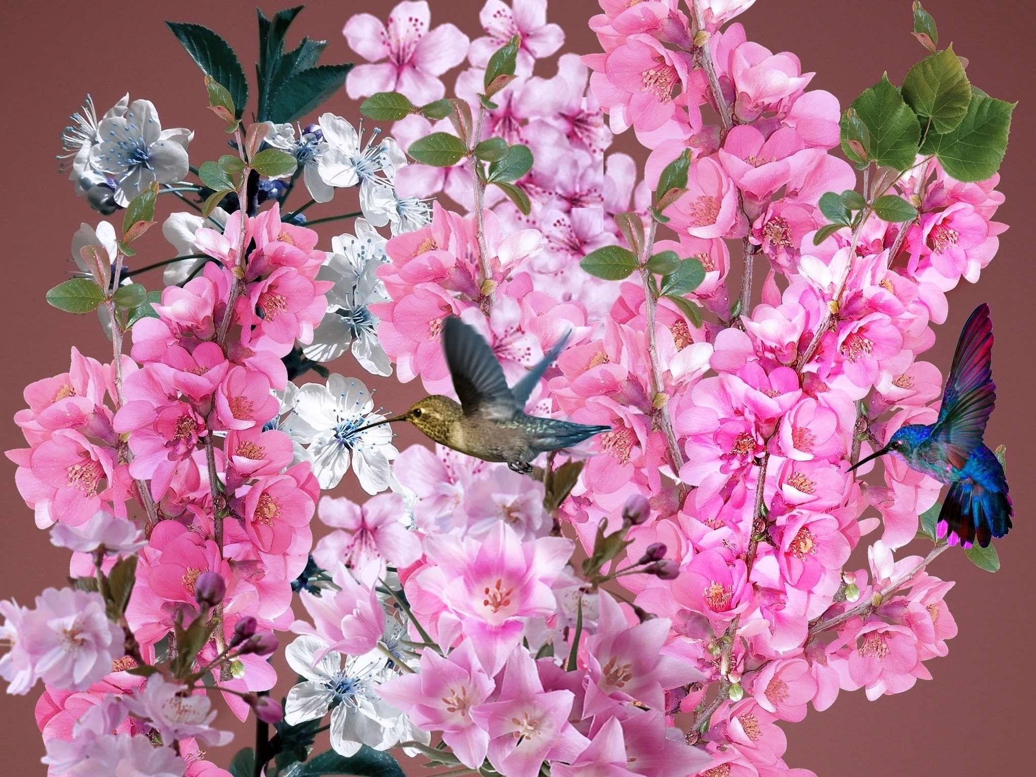 #beija flores #bird #bouquet #colibri #nature #primavera