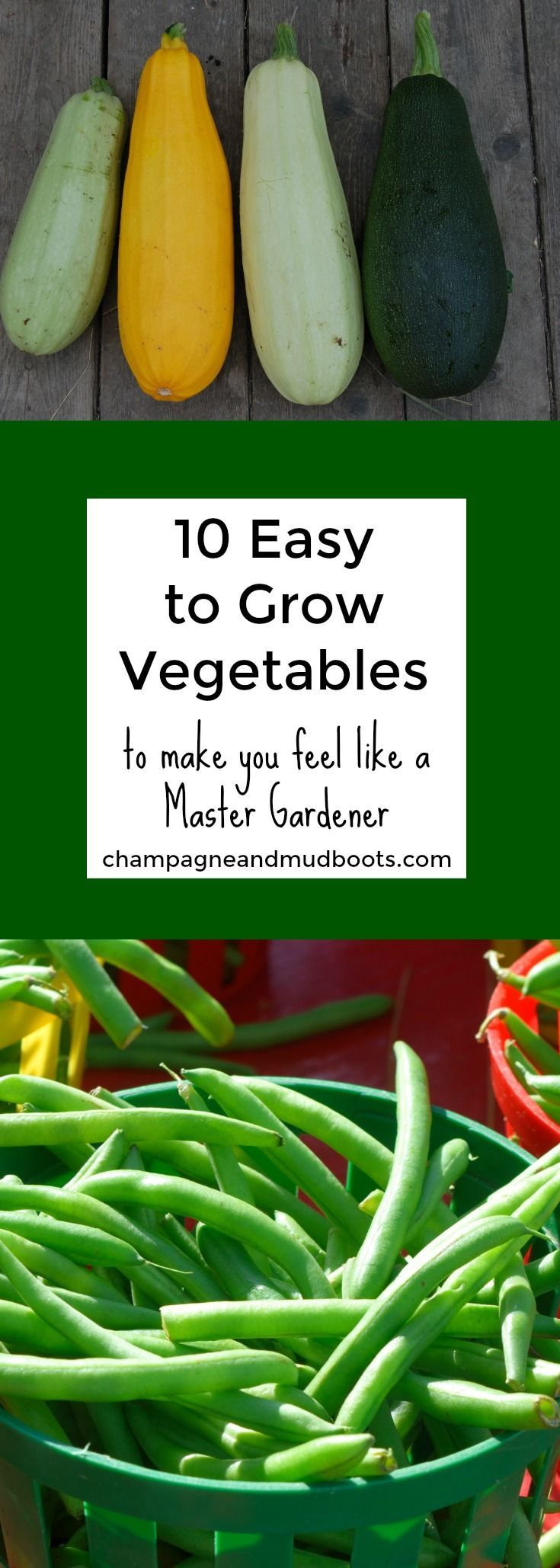 10 Easy to Grow Vegetables for Your Garden Easy
