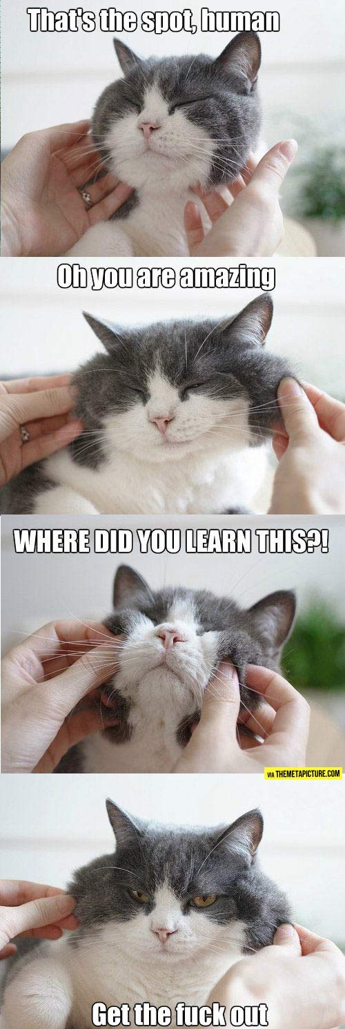 Cat Behavior In A Nutshell The Funny Daily Funny Funny Animal Pictures