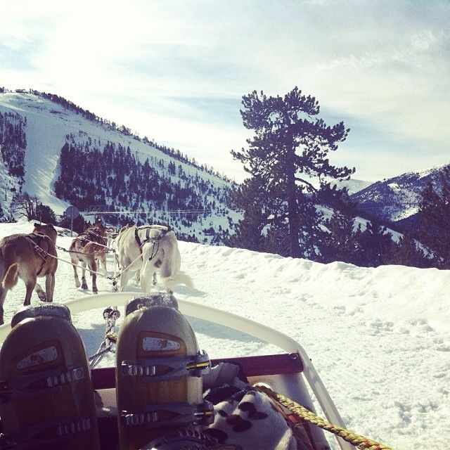 Dog sledging was unbelievable. An amazing experience spent with my best friend!
