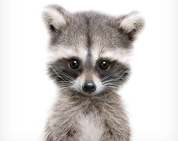Nursery decor, Raccoon print, Woodland animals, PRINTABLE