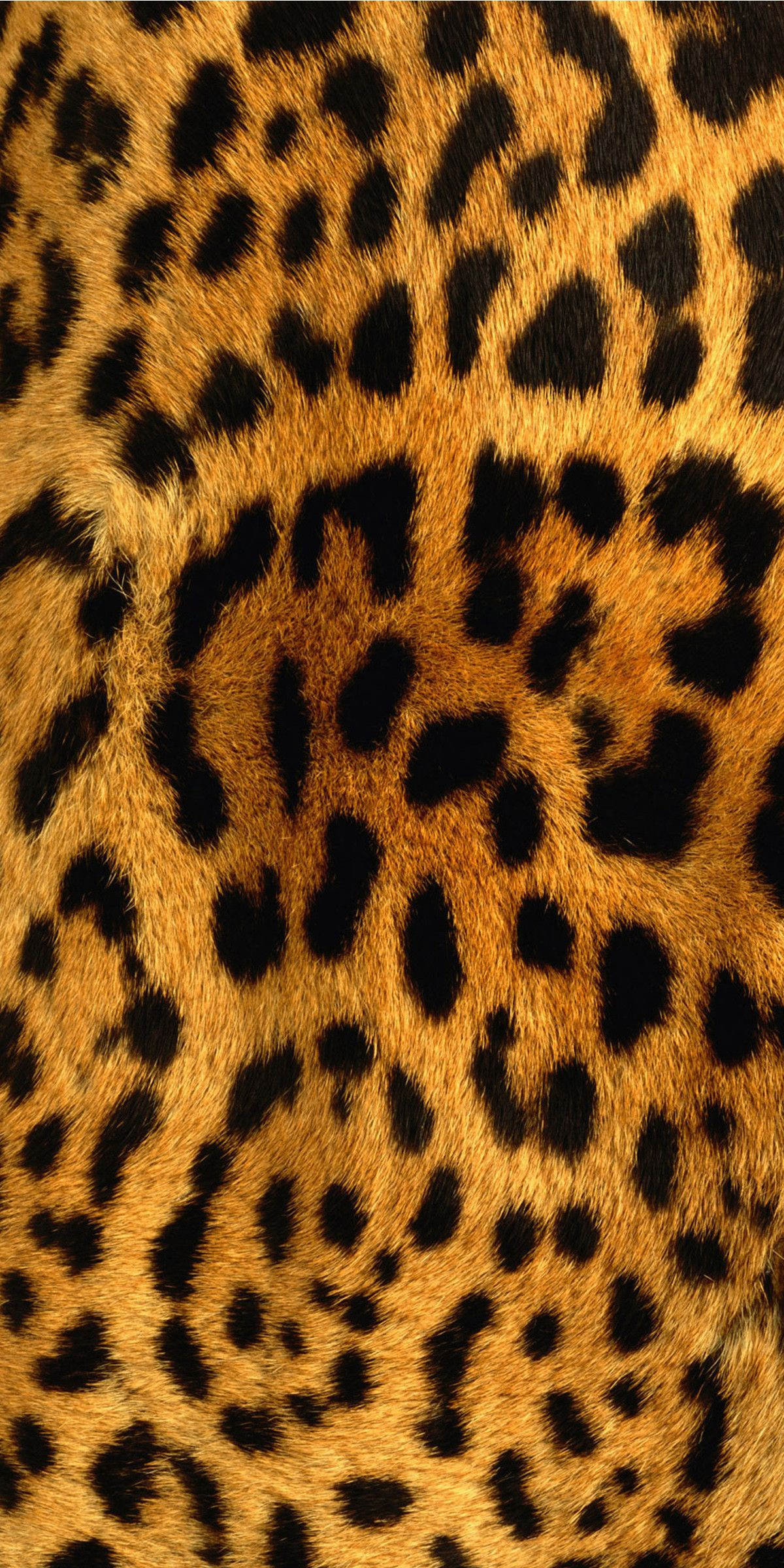 Leopard Coolwallpaper Cute Love Like Pattern Wallpaper Animals Cheetah Print Wallpaper Animal Print Wallpaper Iphone Prints